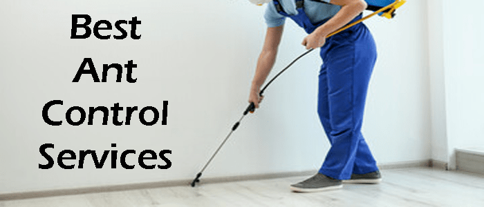 Best Ant Control Services