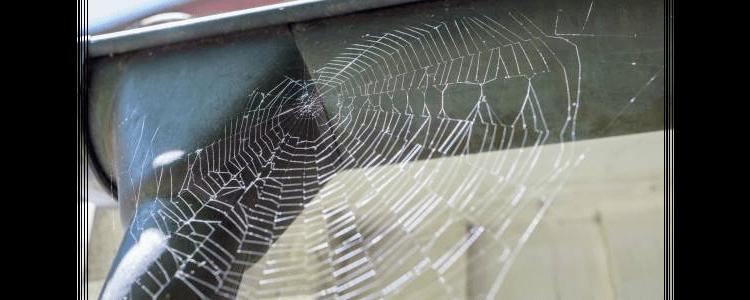 Spider Control Liverpool